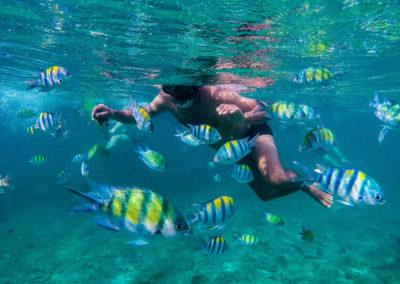 Snorkeling em Loh Samah Bay, Koh Phi Phi