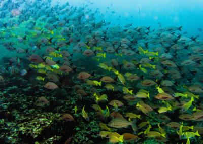 racha e coral passeio snorkeling - tour pelas ilhas da Tailândia