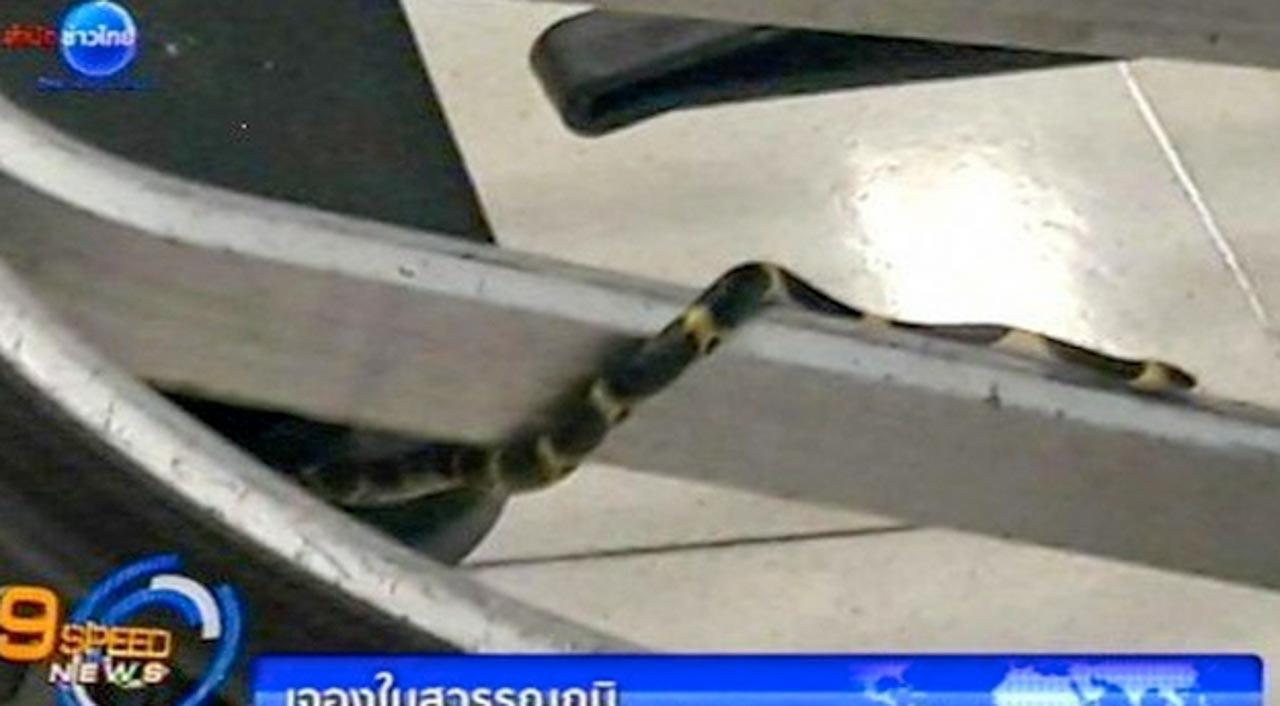Cobras em Aeroporto Internacional de Bangkok na Tailândia.