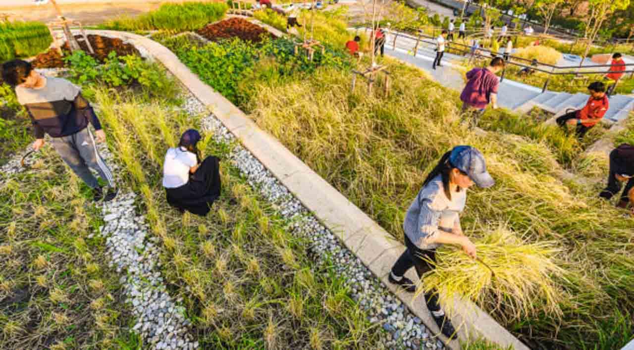 Teto ecológico em Bangkok na Tailândia.