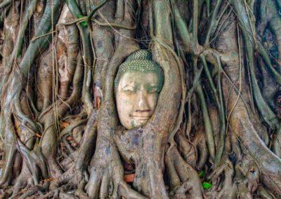 Wat Maha That - cabeça de Buda na árvore. | Foto: Bruno/@passeiosemphiphi