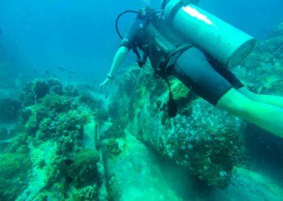 Curso de Mergulho em Koh Tao Tailândia - diferentes tipos de animais e vida marinha ativa