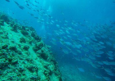 Mergulho em Koh Tao Tailândia - cardumes e diferentes peixes em Koh Tao