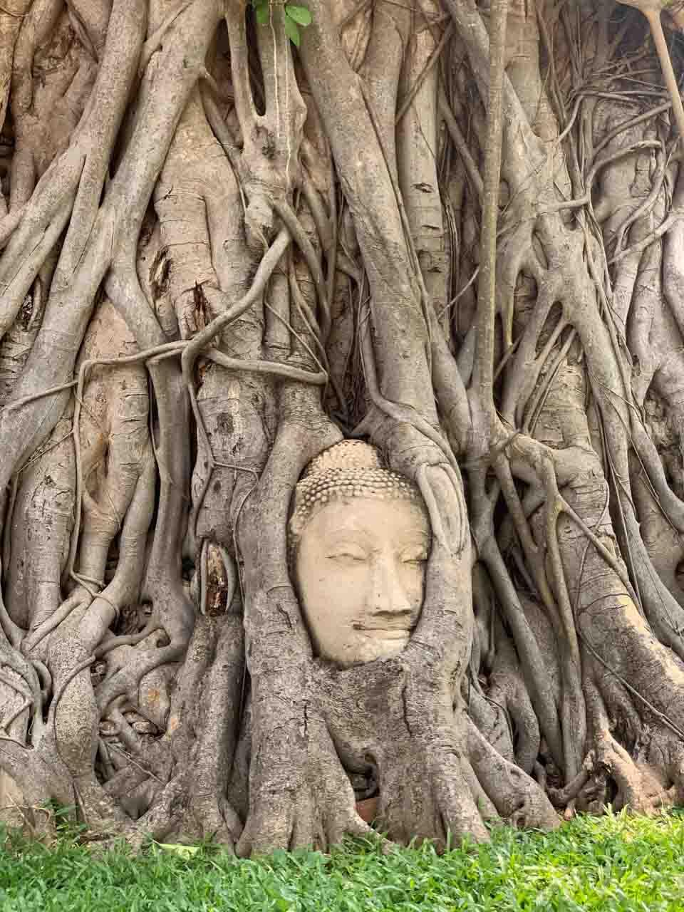 Passeio para Ayutthaya - cabeça de buda na árvore na Tailândia