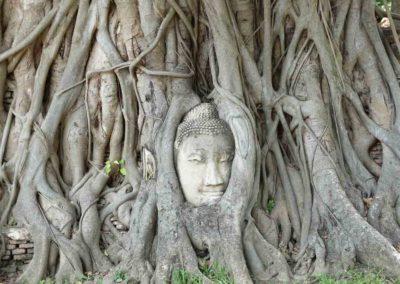 Passeio para Ayutthaya - cabeça de Buda na árvore